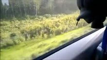 Risky blowjob on a train